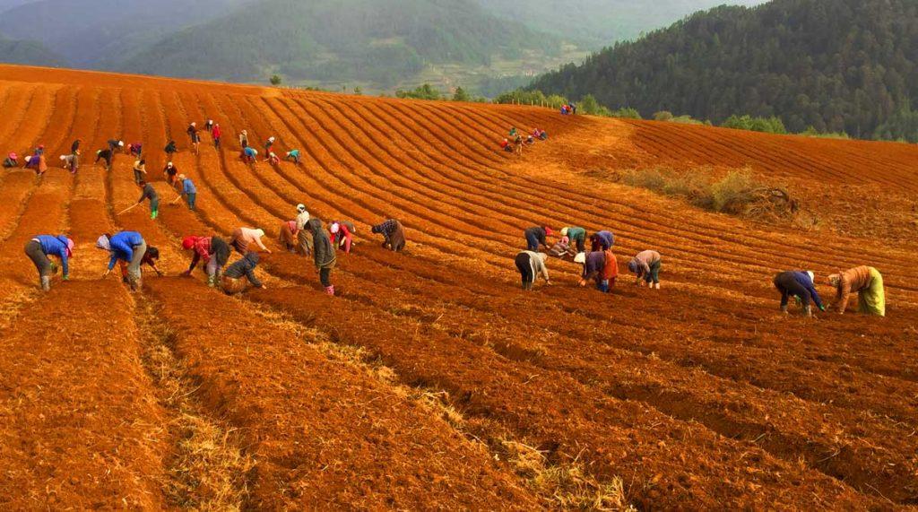 Wobthang-soil